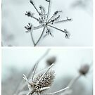 Frosty Twigs Collage by Kate Towers IPA