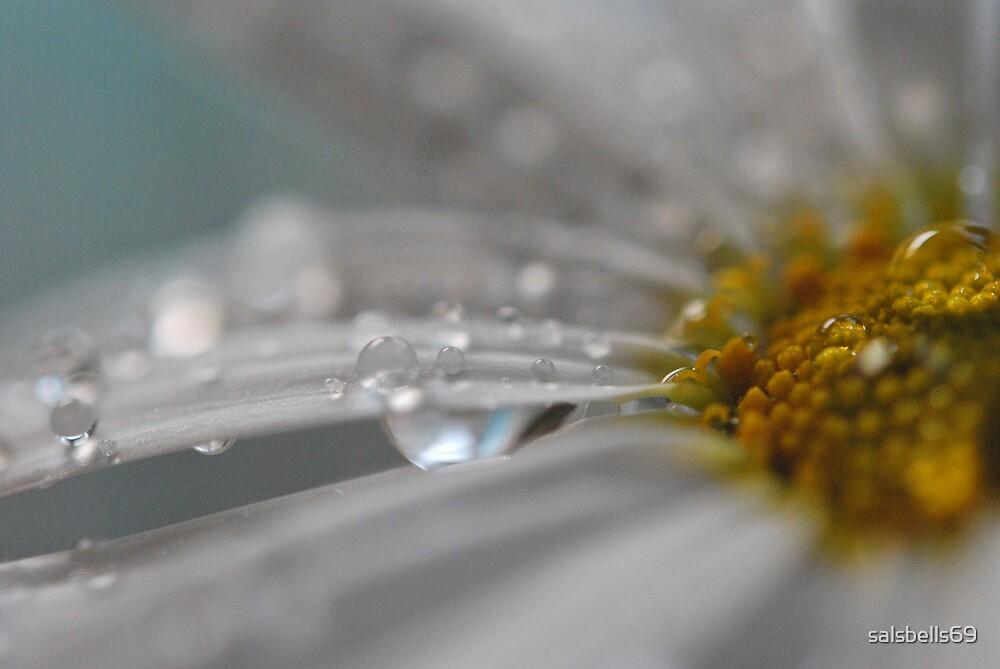 Raindrop Kisses by salsbells69