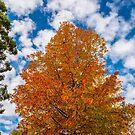 Autumn by Peter Rattigan