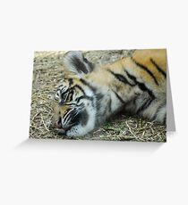 Cute Tiger Cub Greeting Card