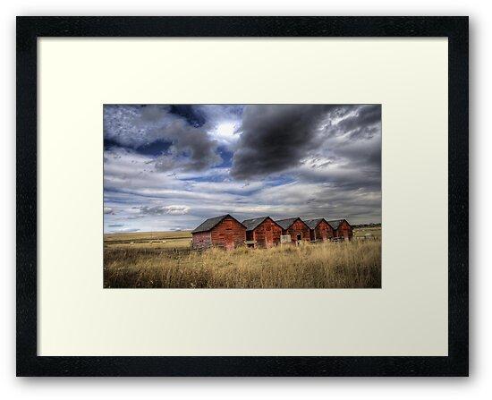 Five Red Barns by PrairieRose