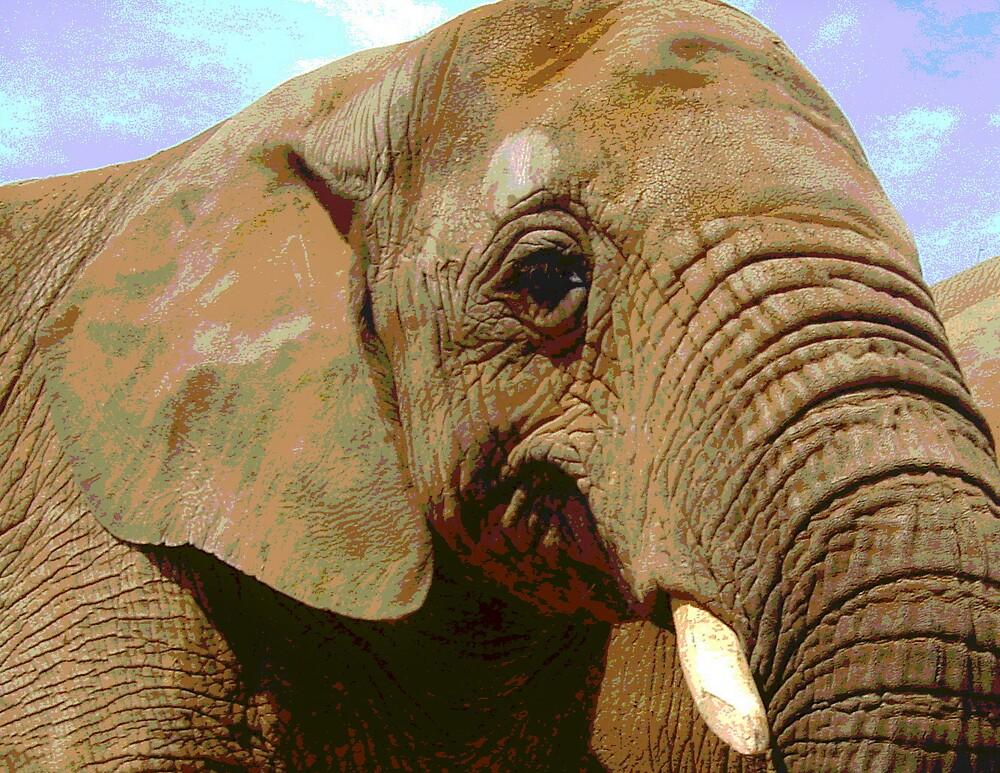 Elephant by Kate Towers IPA