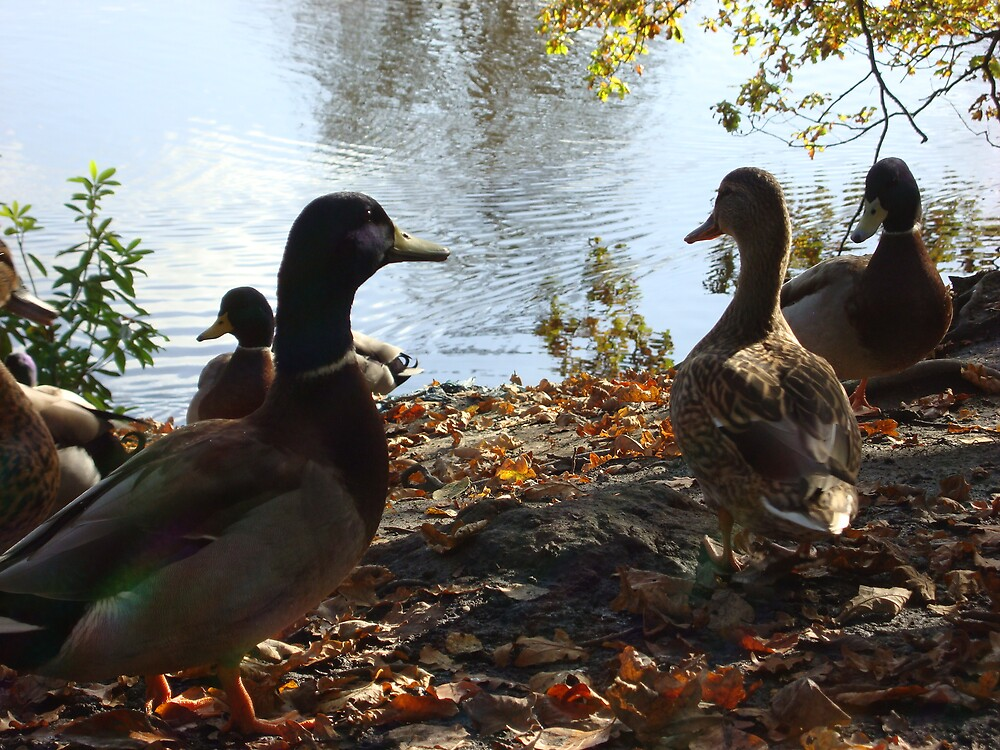 we'll wait 'till the swans go by berniehorne