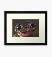 Thick-tailed  gecko Framed Print