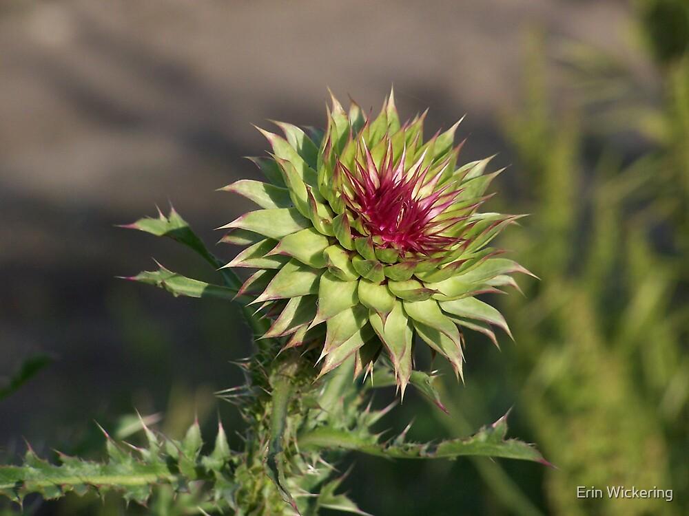 Thorny Flower by Erin Wickering