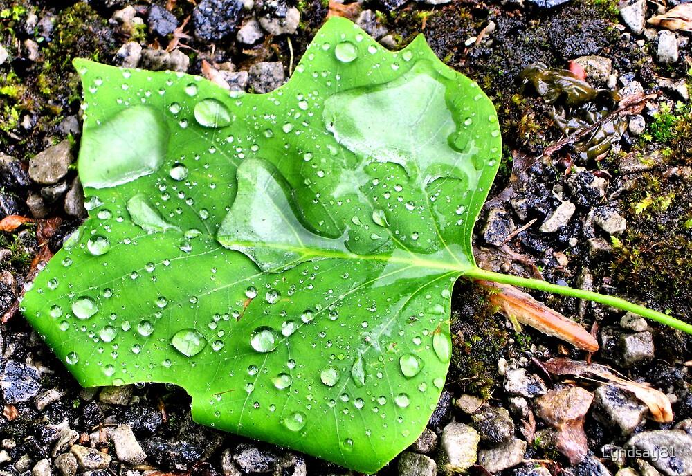 WaterDrops On A Leaf by Lyndsay81