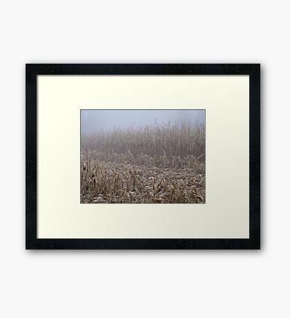 Corn in the Mist Framed Print