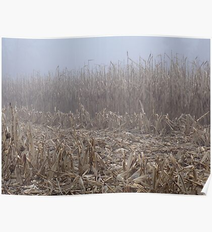 Corn in the Mist Poster