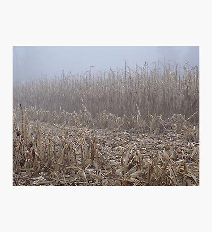 Corn in the Mist Photographic Print
