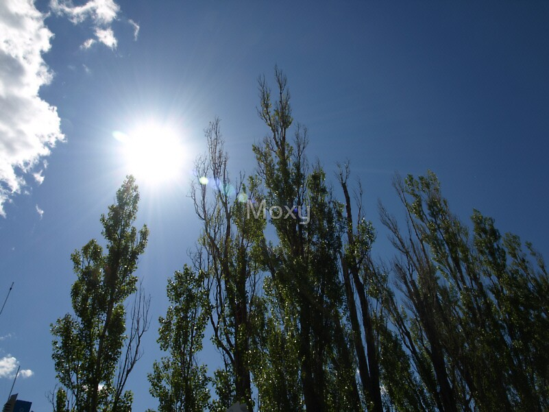 Reaching to the Sky by Moxy
