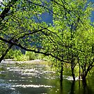 Merced River in Yosemite by Colette Hope Marks