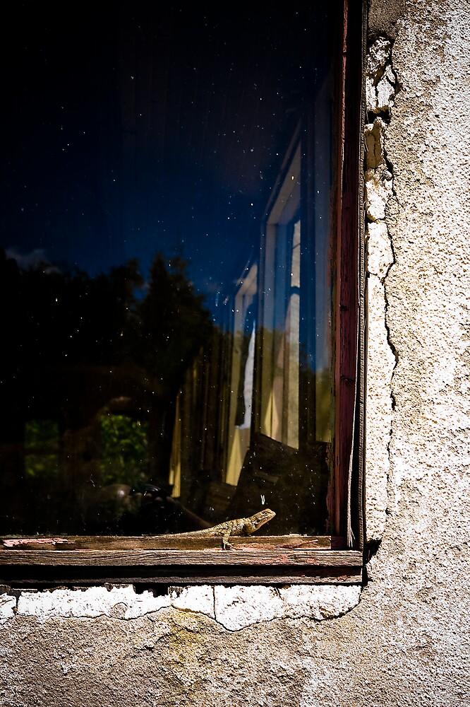 lagarto de ventana by elpelon