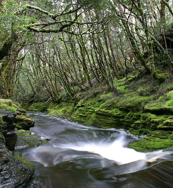 Douglas Creek by Mike Calder