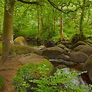 Foret d'Huelgoat Brittany France by Buckwhite