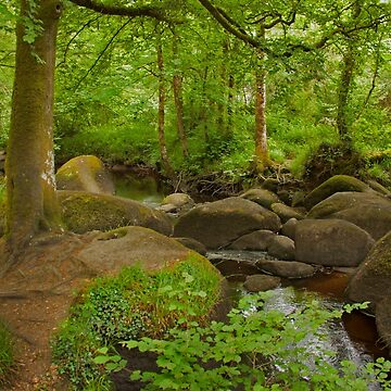 River and Foret d'Huelgoat Brittany France by Buckwhite