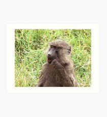 wild baboon Art Print