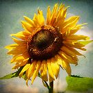 Sunflower by Jennifer Rhoades