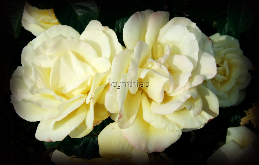 lemon rose`s by cynthiab