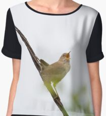 Wren Songbird Bird on Rusty Wire (Troglodytes) Chiffon Top