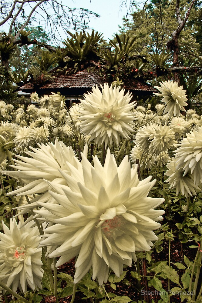 Flowers - King Mothers Royal Garden, Thailand by Stephen Permezel