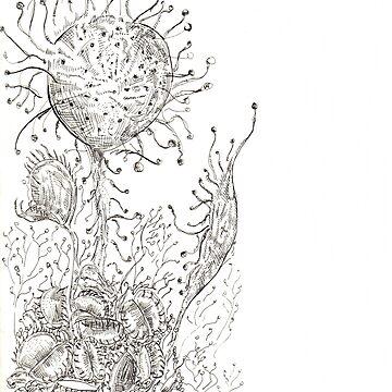 Carnivorous plant/ Drosera rotundifolia by NataliaMotta