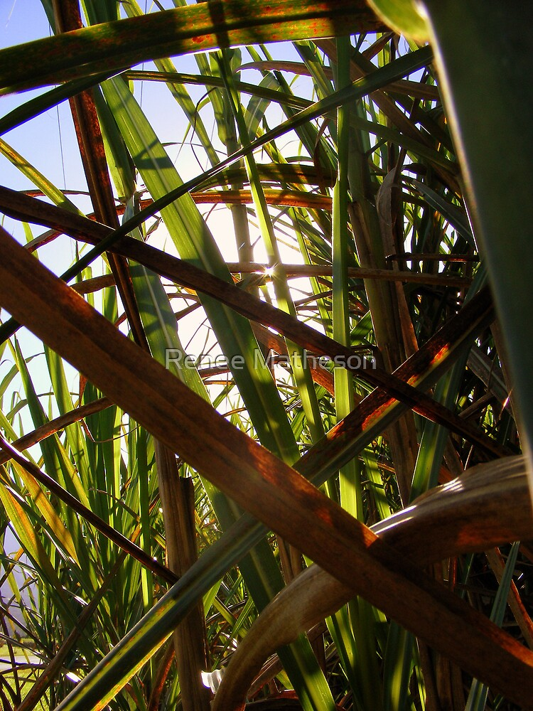 sugar cane by Renee Matheson
