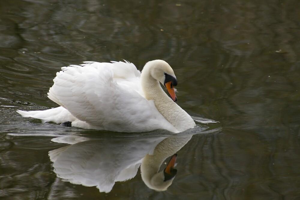 Mirrored Swan by Amareth
