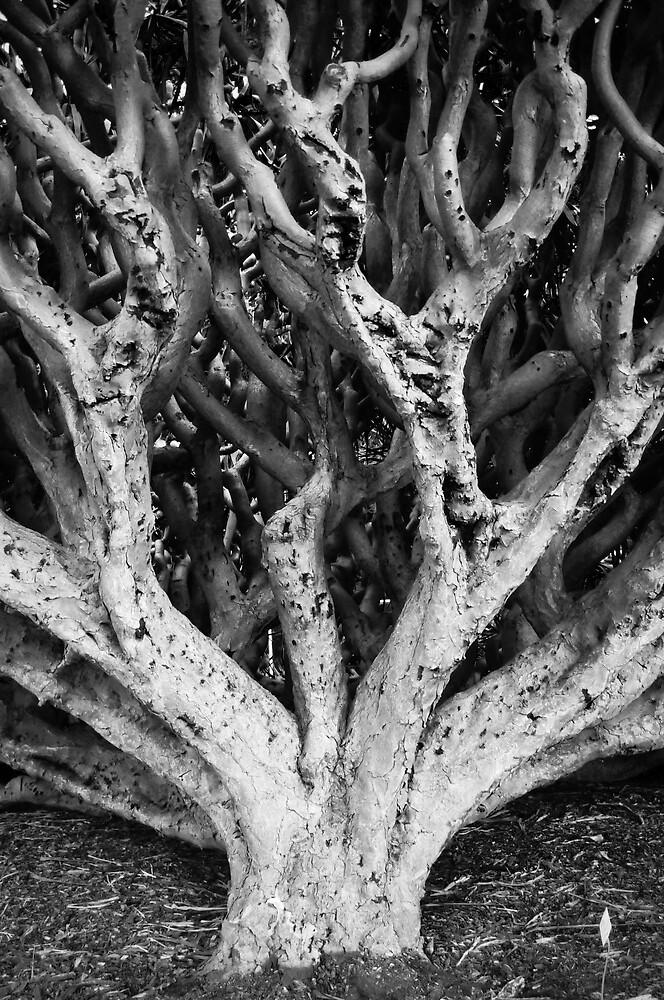 Tree Maze by brad0928