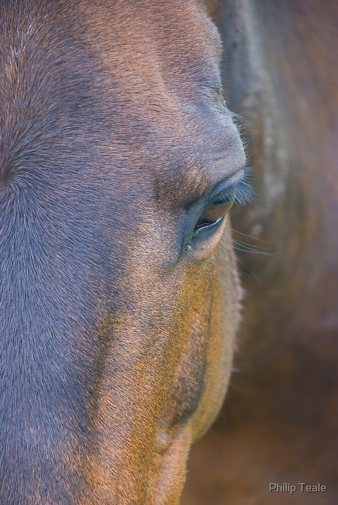 Horse Face by Philip Teale