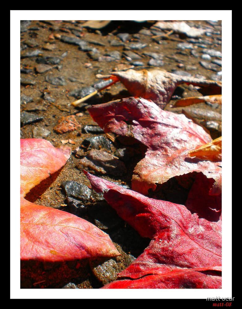 autumn leaves-1 by matt ucar