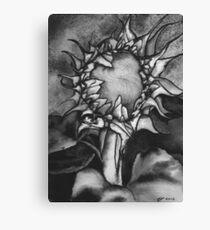 Grey scale Sunflower Canvas Print