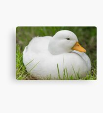 White Callduck / Call Duck Canvas Print