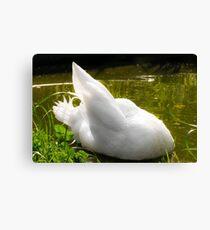 White Callduck / Call Duck Canvas Print