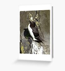 Razorbill Greeting Card