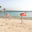 Flamingos, Sunset by Southern  Departure