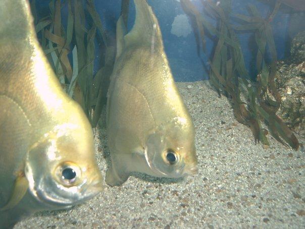 Fish by punkymonkey