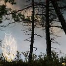 16.7.2017: Cobwebs in the Forest by Petri Volanen
