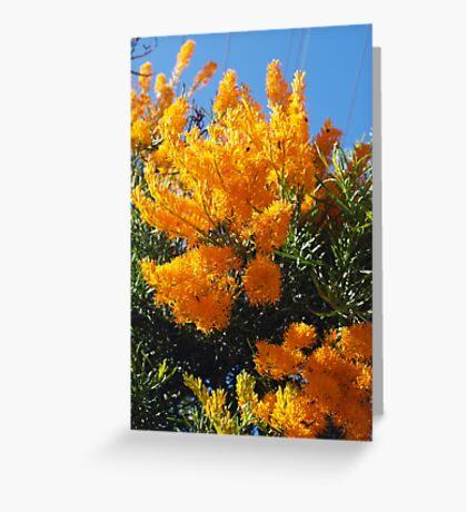 Nuytsia Orange Greeting Card