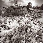 Monotone winter, Mount Buffalo by Kevin McGennan
