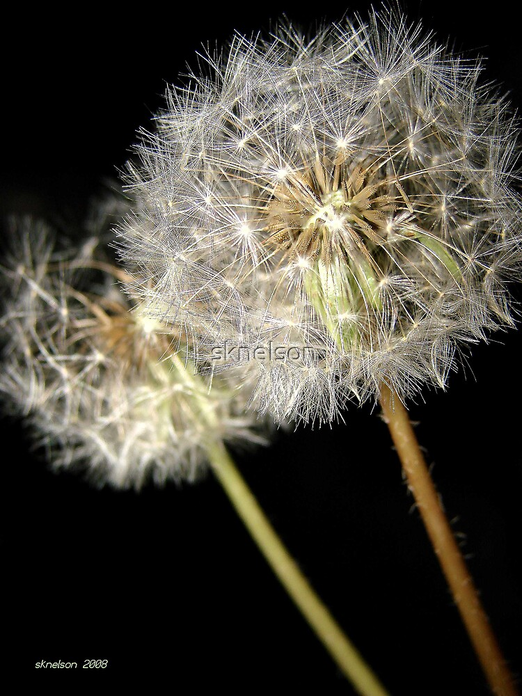 Weeds? by sknelson
