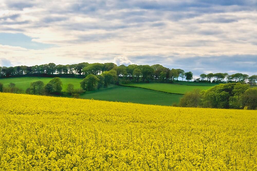 West Lothian Landscape II by Chris Clark