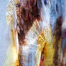 The Tree Bark Collection # 20 - The Magic Tree by Philip Johnson
