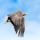 Sea Eagle by peaky40