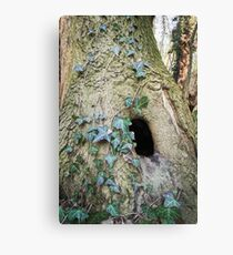 Tree Trunk with Hole Canvas Print