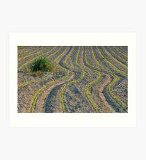 Worked land Art Print