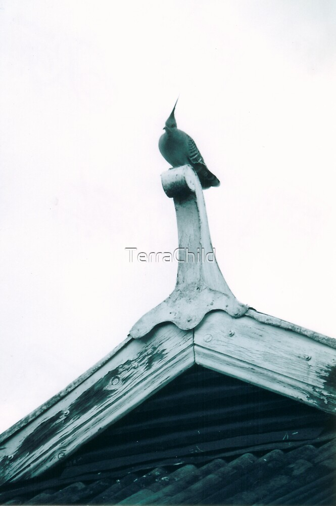 Topknot On The Roof II by TerraChild