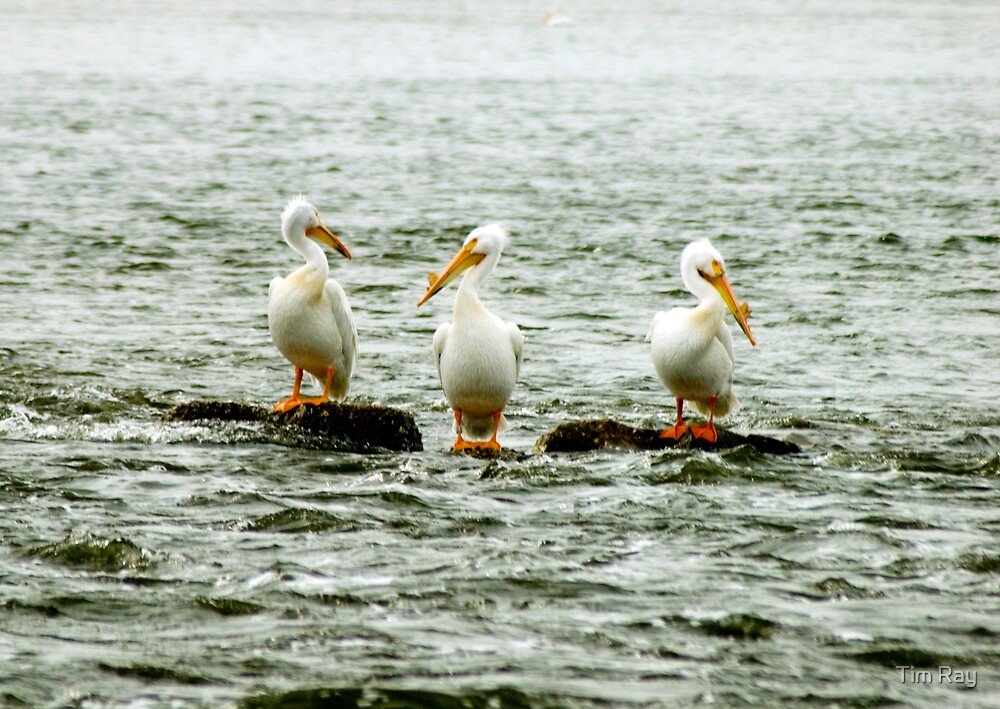 The Three Amigos by Tim Ray