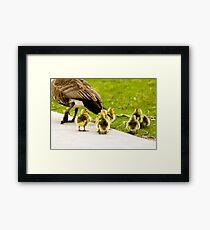 Goslings Framed Print