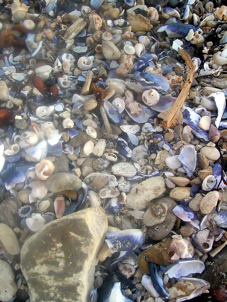 Shells, Shells, Shells by Dianna