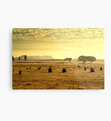 Dry Pasture,Mt Duneed Metal Print